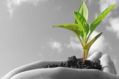 social-growth